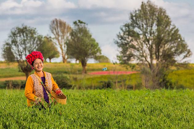 a farmer in kalaw